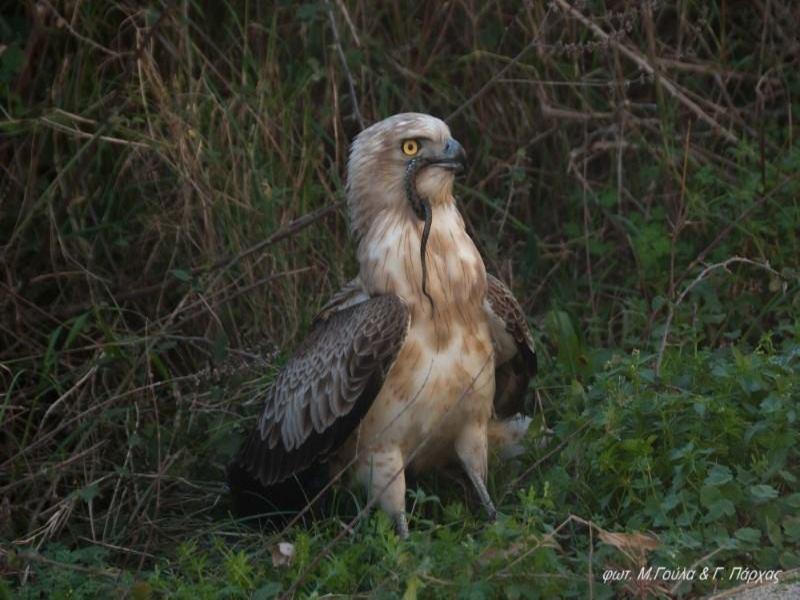 Τεράστιο πουλί σκατά