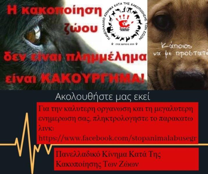 Κακοποίηση ζώων και ακτιβισμός - Η αδέσμευτη φωνή των τετράποδων
