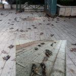 Εξωπραγματικές εικονες με εκατοντάδες νεκρά πουλιά στη Χαλκίδα, μετά τη φονικη κακοκαιρία